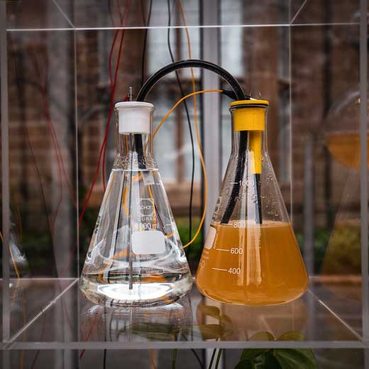 A close-up view of Urinotron's installation with two erlenmeyers flasks filled with urine to produce electricity.